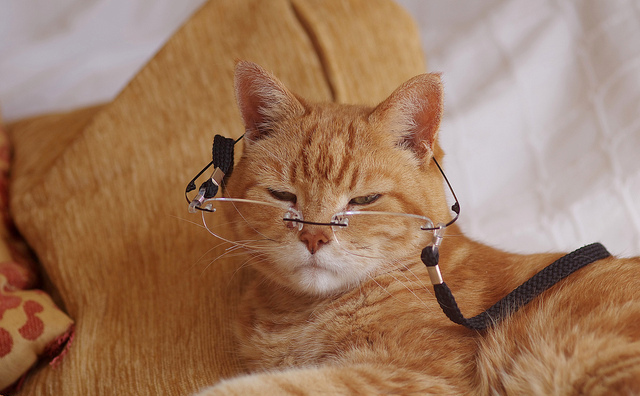Ginger cat with glasses on bed for the article on the 8 most common problems in senior cats