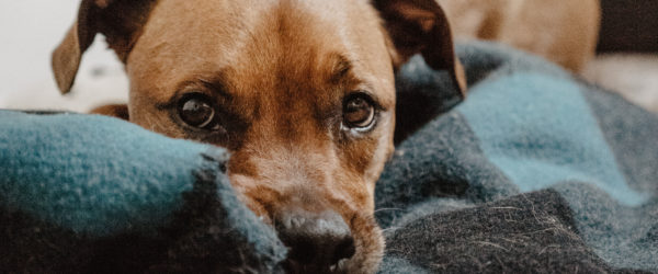 Tips To Keep Your Pets Safe During Fireworks – So Don't Go Crackers
