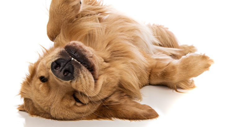 Crazy Things That Dogs Do And Should You Be Worried?