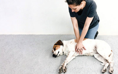 When & How To Perform CPR On Your Pet