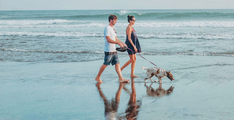 Holiday With Your Pets: Vacation To Staycation Tips