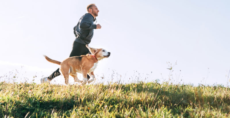 How To Get My Pet Into Shape? With These 5 Easy Steps Of Course!
