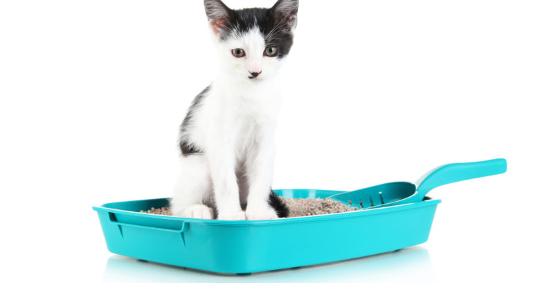 How To Choose The Right Cat Litter For Your Cat, Home And Life