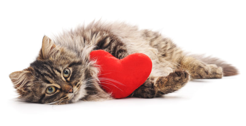 5 Ways To Spoil Your Cat This Valentine's Day