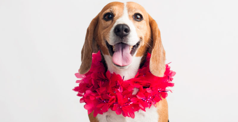 How To Spoil Your Dog This Valentine's Day