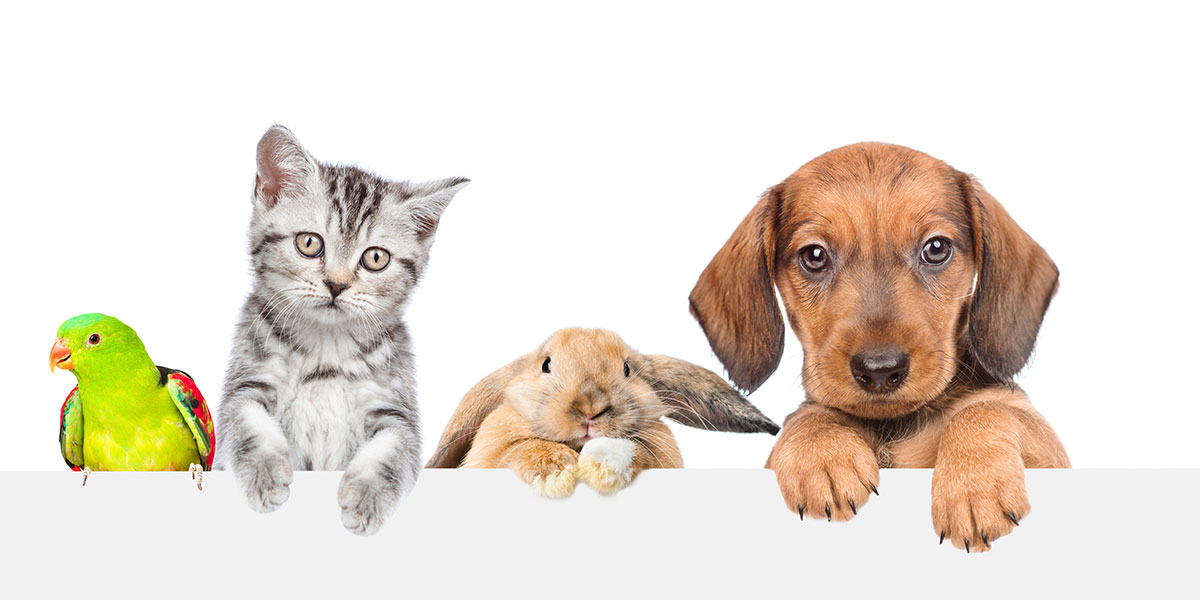 How To Treat Your Pet On Love Your Pet Day: TOP TIPS