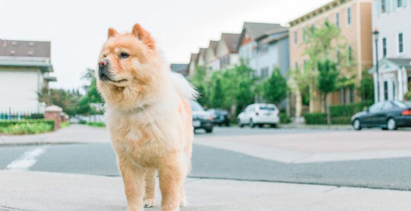 TOP FAQ's – Ask The Behaviourist – Part 2 – Runaway Pets