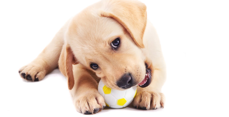 21 Ways To Keep Your Puppy Healthy, Happy And Awesome