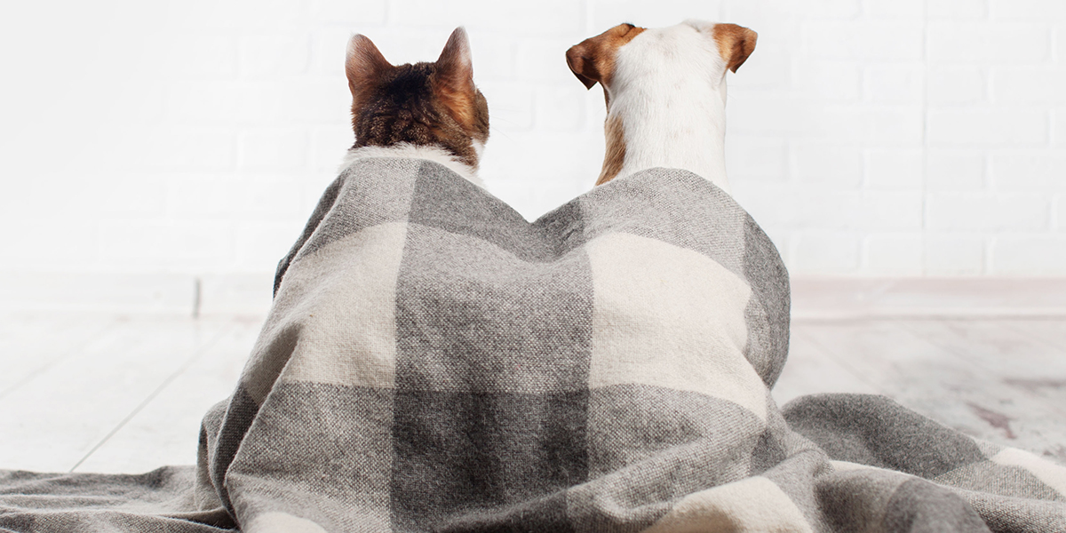 Our Must-Have Pet Winter Warmers