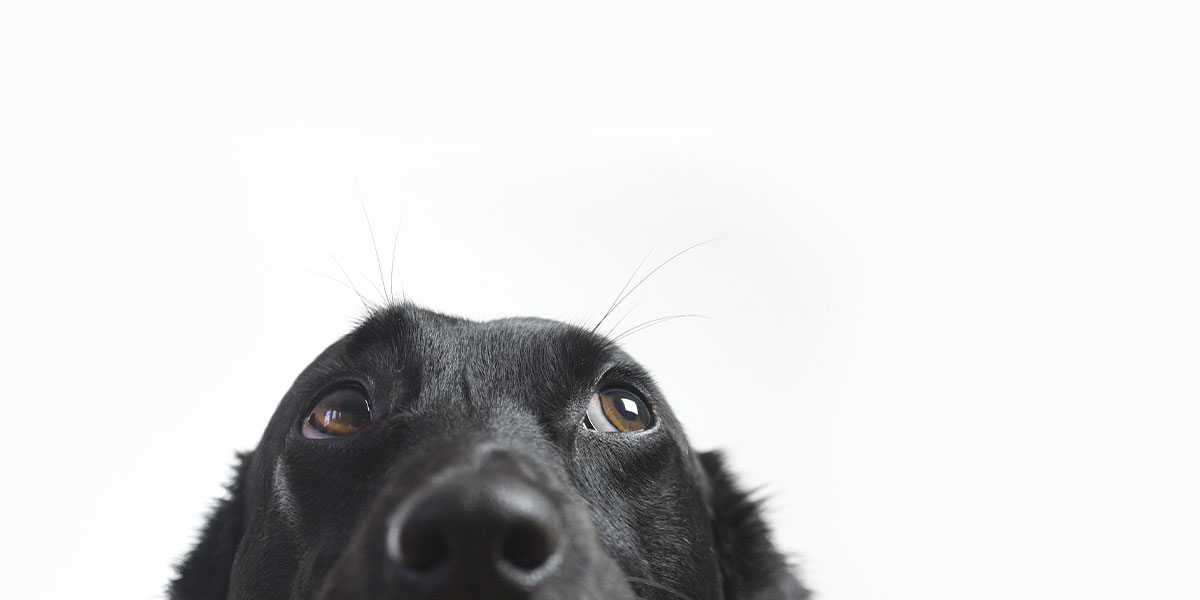 Does My Dog Suffer From Separation Distress? PART 2