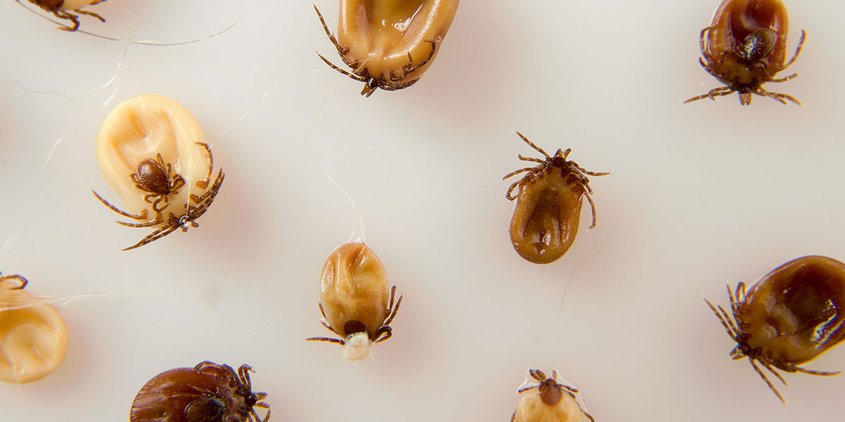 What's Bugging My Pet? And How To Tackle It Head-On: