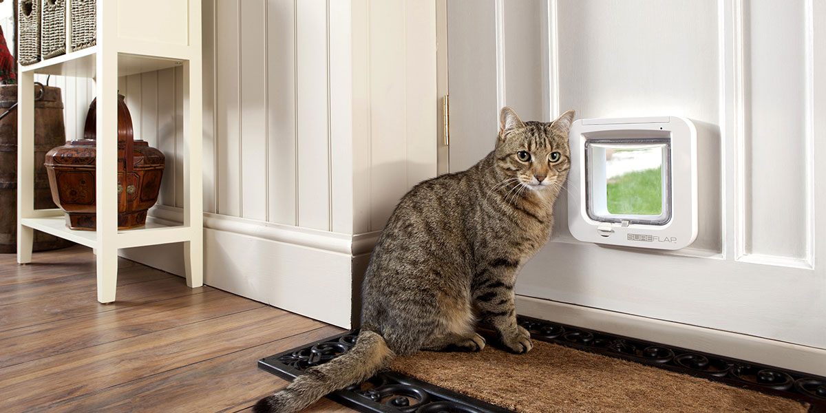 How To Teach Your Pet To Use A Pet Door In 3 Easy Steps