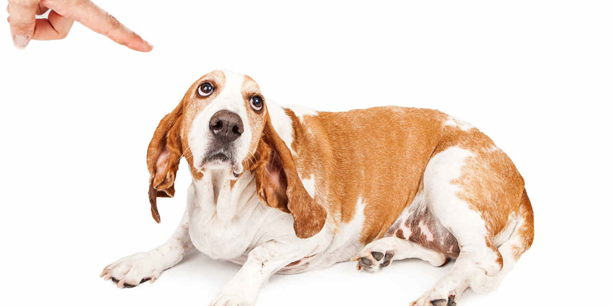 Is It OK To Punish Your Dog?