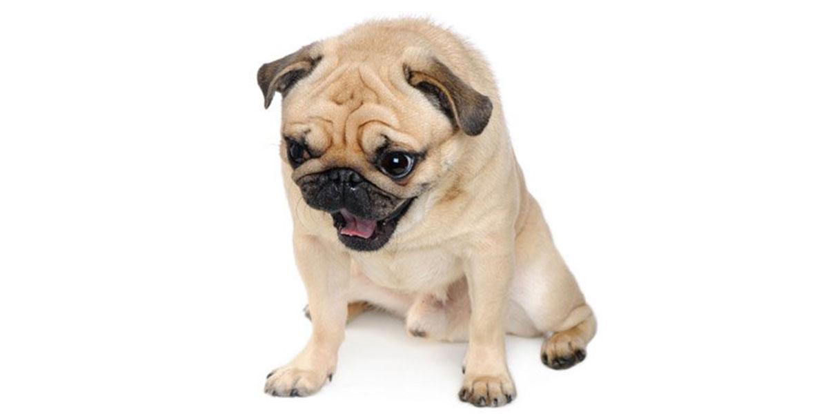 When Not To Make Your Dog Vomit