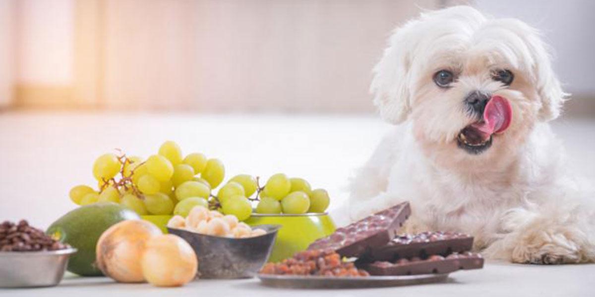 10 Voedselsoorte Wat Jou Hond Nooit Moet Eet Nie