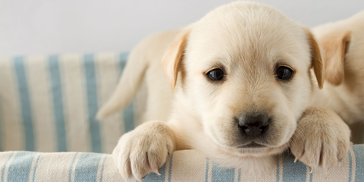 8 Super Common Mistakes New Puppy Owners Make
