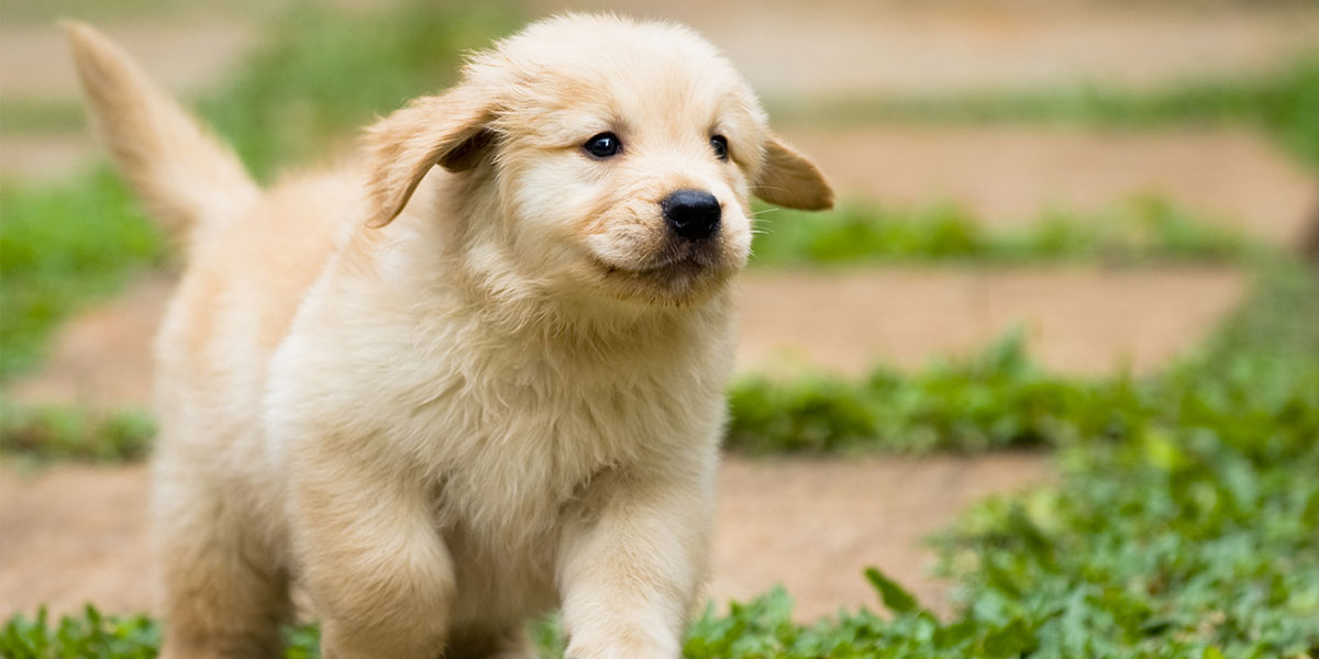 How To Introduce Your Puppy To The World