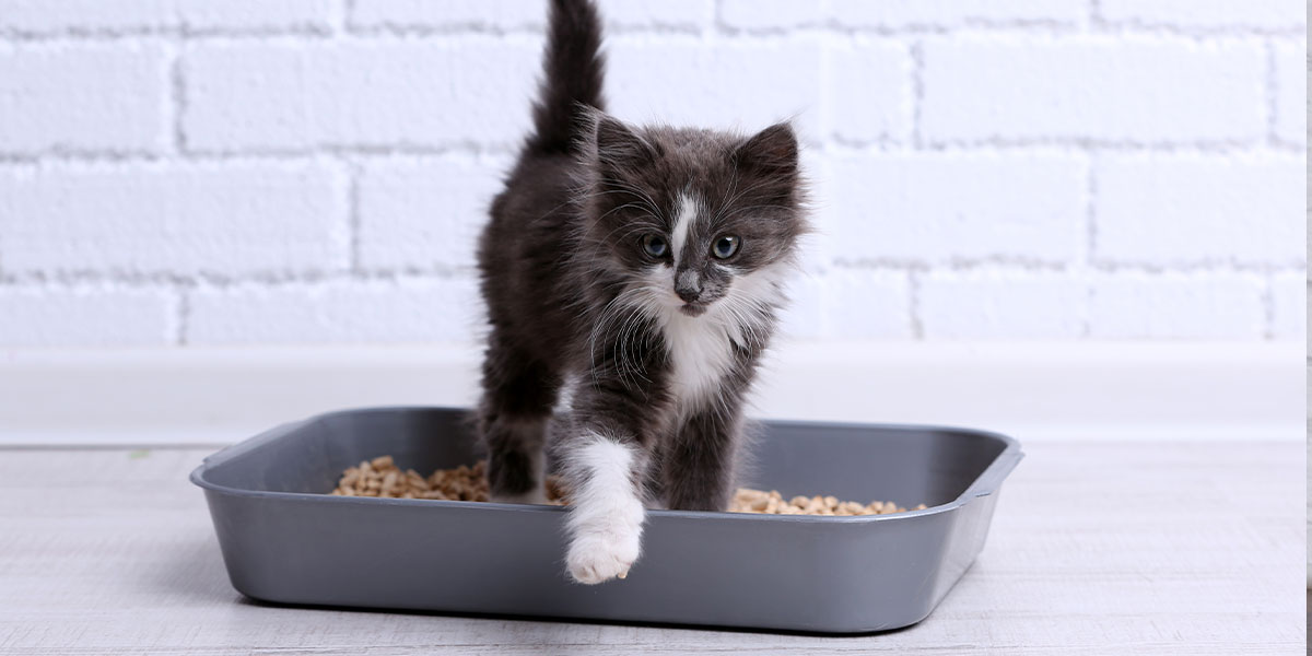 Choose The Right Cat Litter For Your Cat