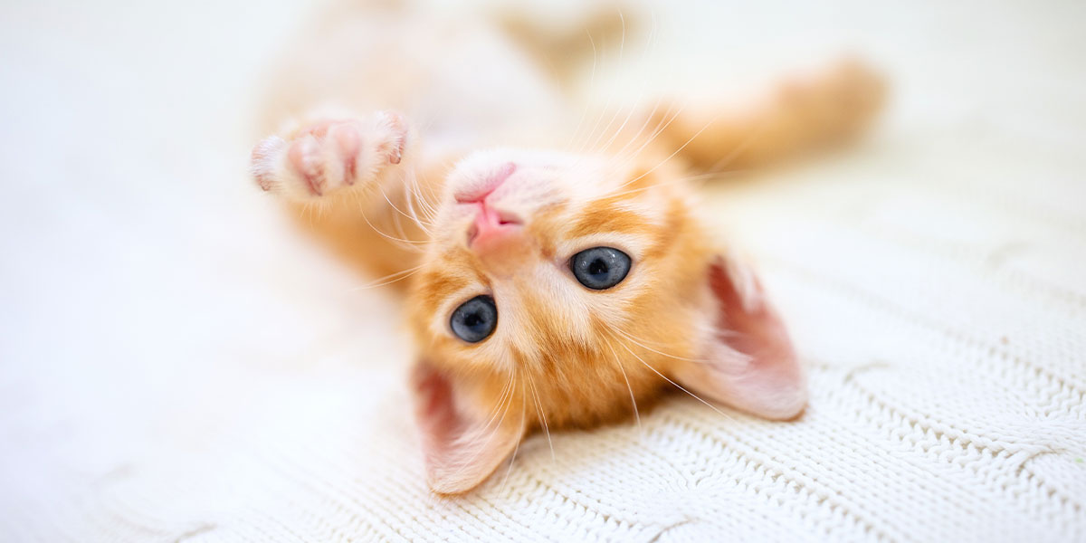How To Keep Your Kitten Healthy – Here's The Lowdown