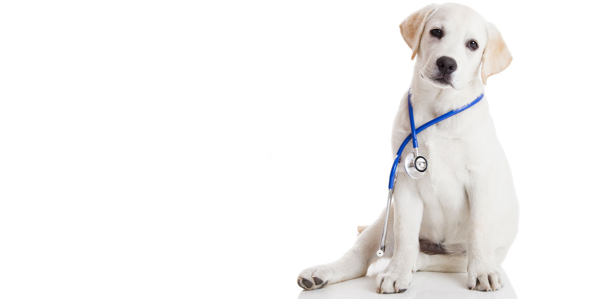 How To Prepare For Dog Emergencies And How To Handle Them