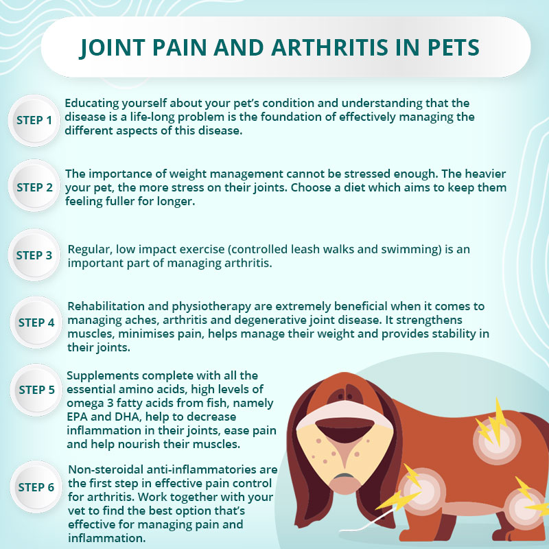 An ePETstore infographic on joint pain and arthritis in pets.