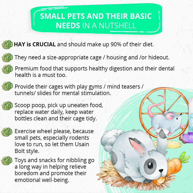 an ePETstore infographic listing small pet basic needs
